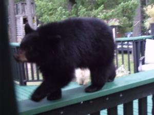 White bears Kristy Anonson 7