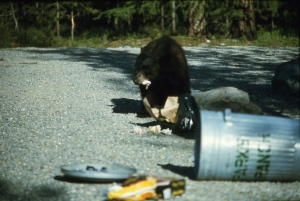 garbage kills bears
