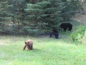 bear family from fernie